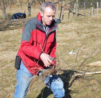 junge zwetschgenbäume schneiden